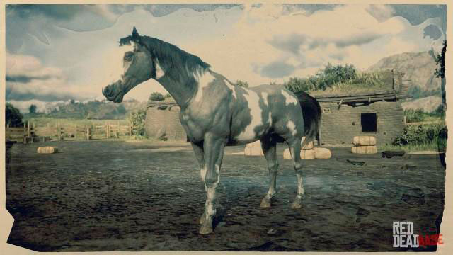 American Paint Horse rdr2