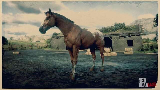 Appaloosa Horse rdr2