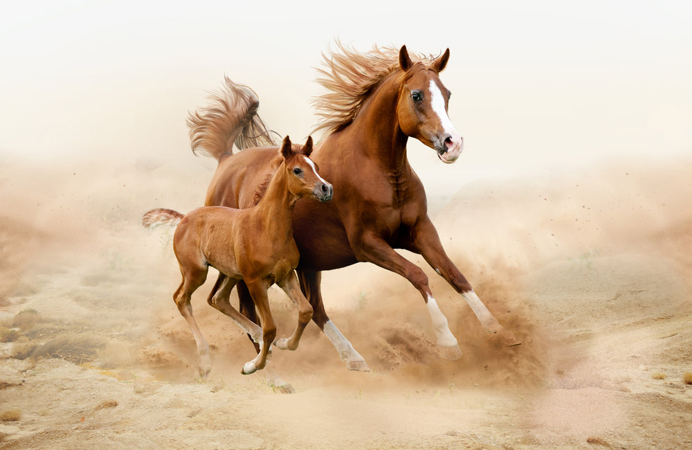 Arabian Horse mare and foal