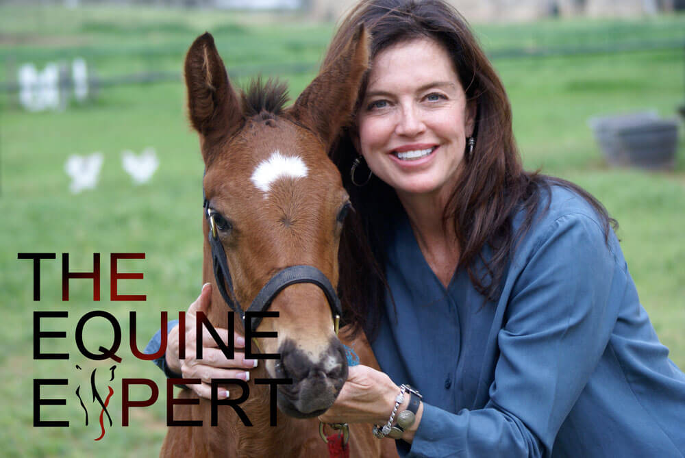 Bridget R. Brandon the Equine Expert