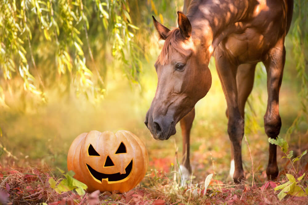 Halloween collage with a horse and pumpkin