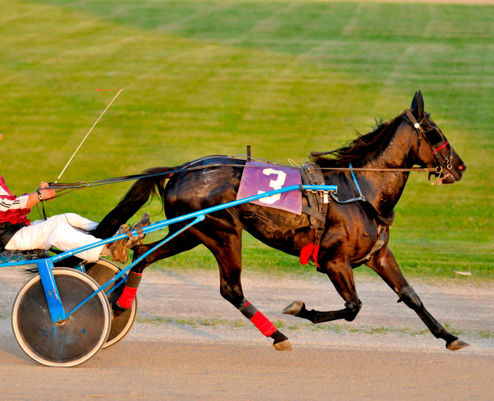 Harness racing with a thoroughbred horse