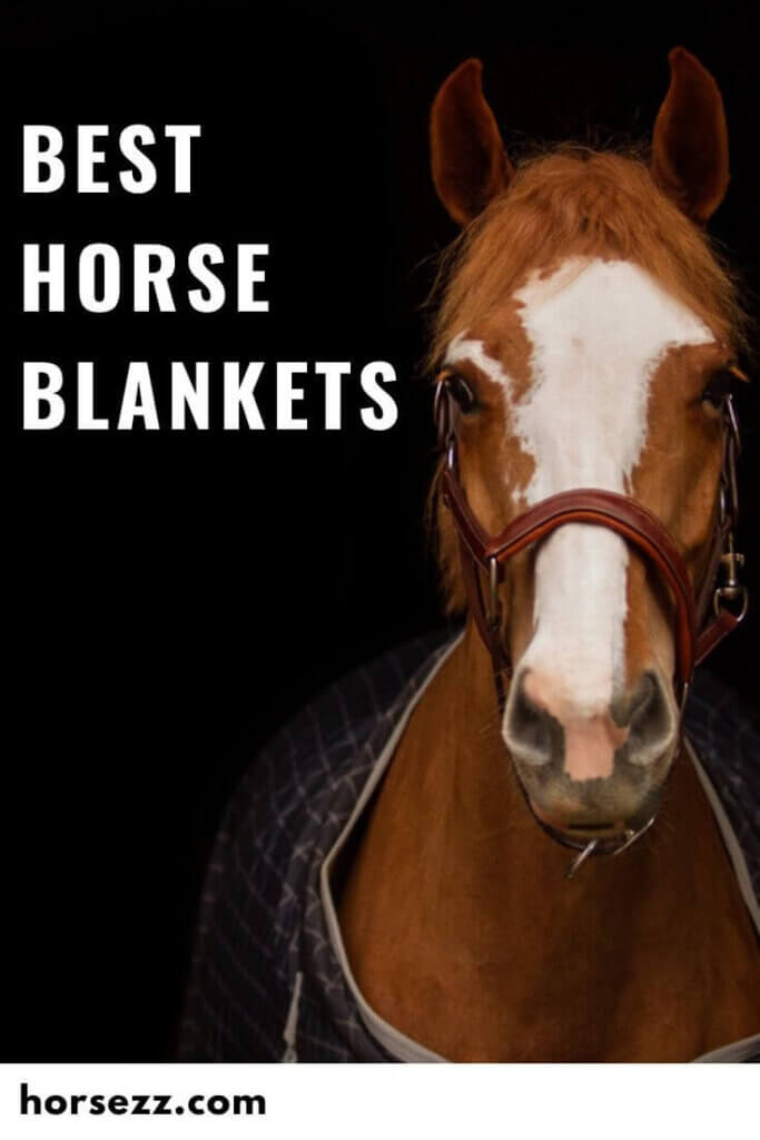 Horse Blankets Social Image