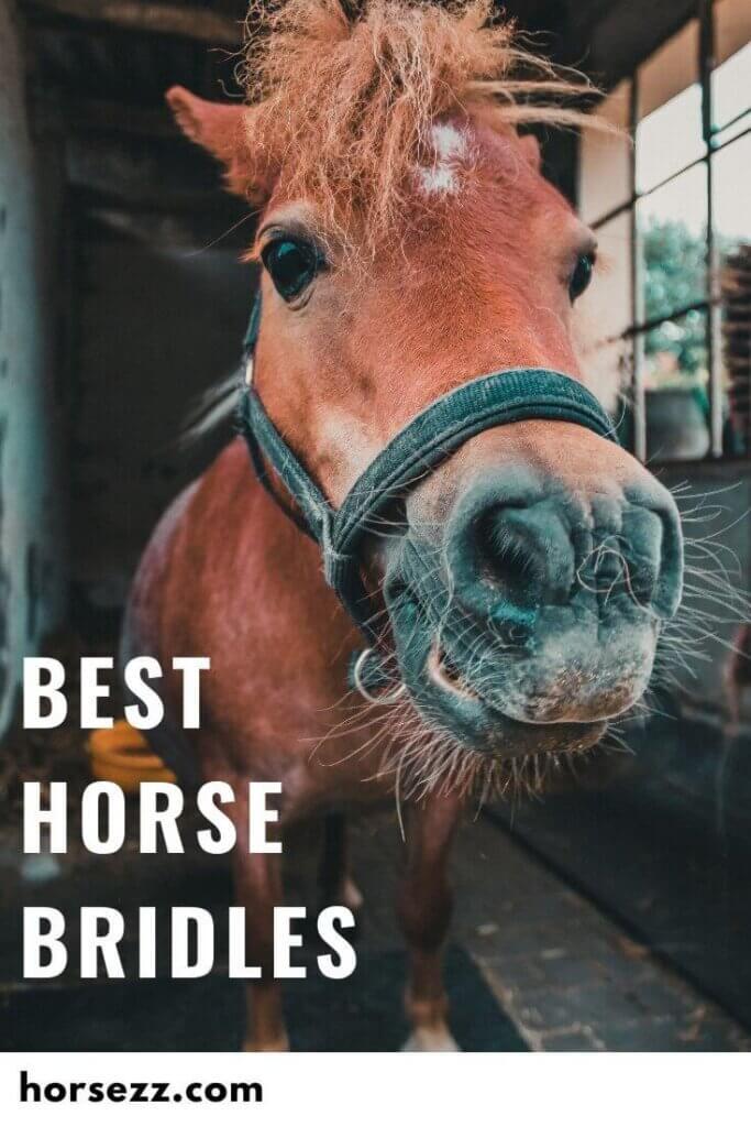 Horse Bridles Social Image