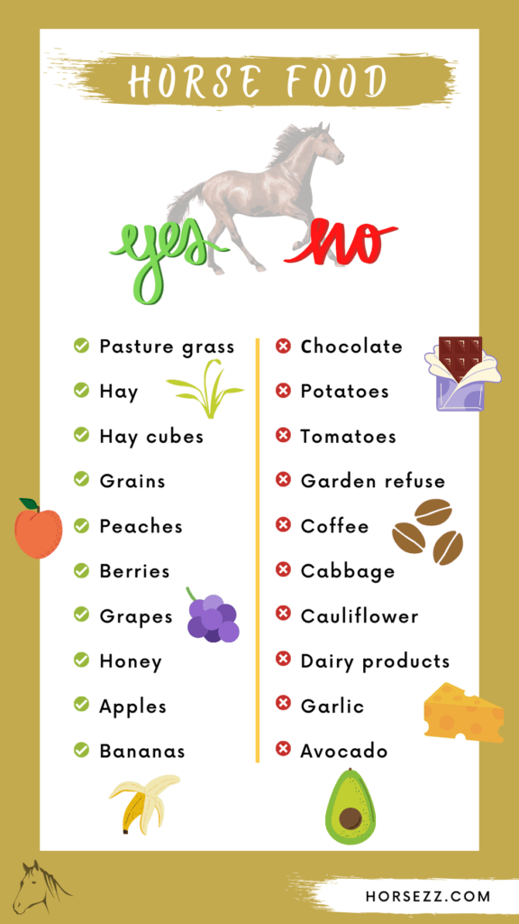 Horse food infographics