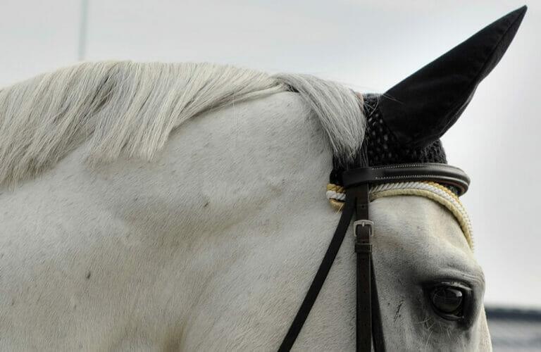 Horse poll