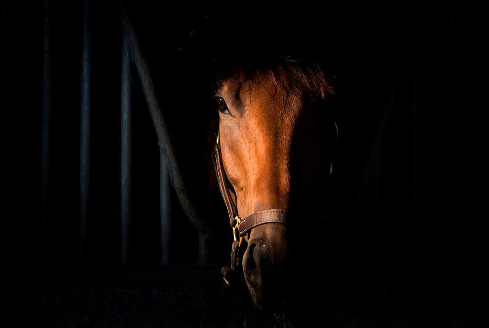 Horse portrait on dark background inside stable