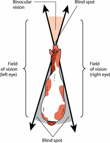 Horse vision range chart