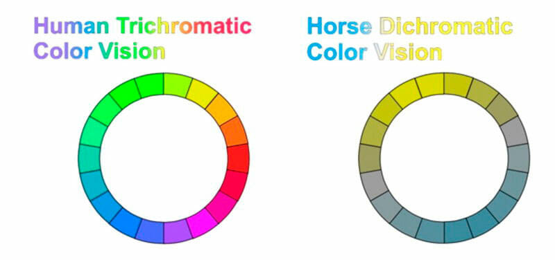 Human and horse color vision chart