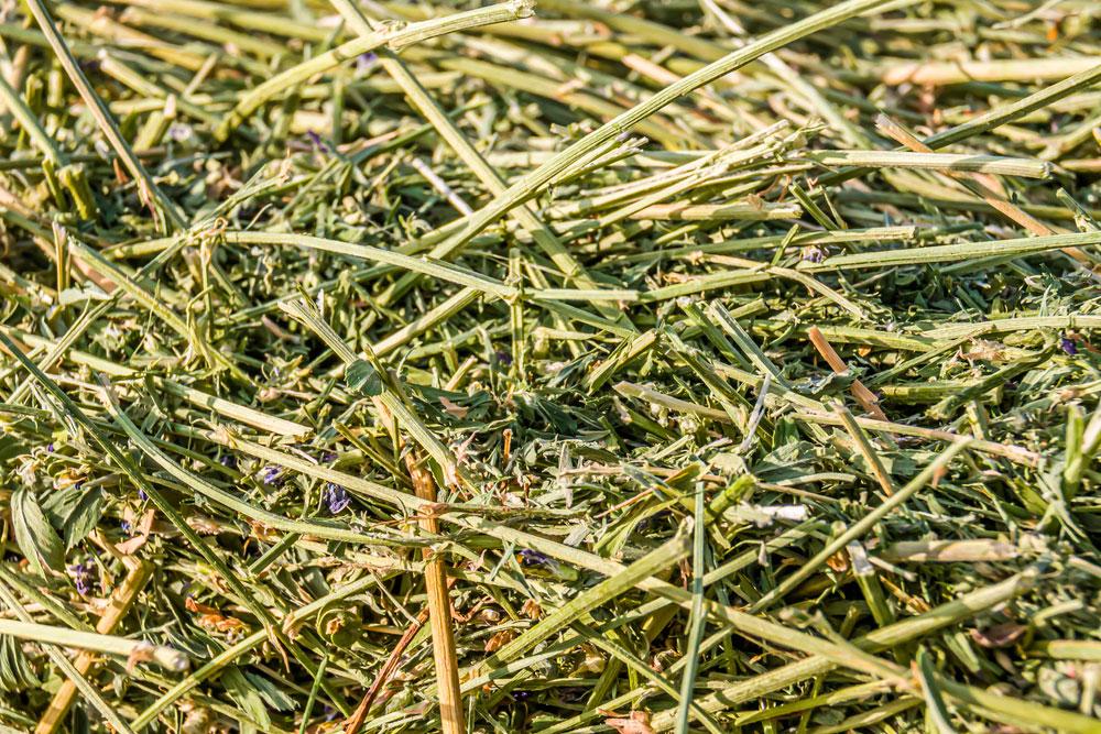 Legume Hay processed in hay