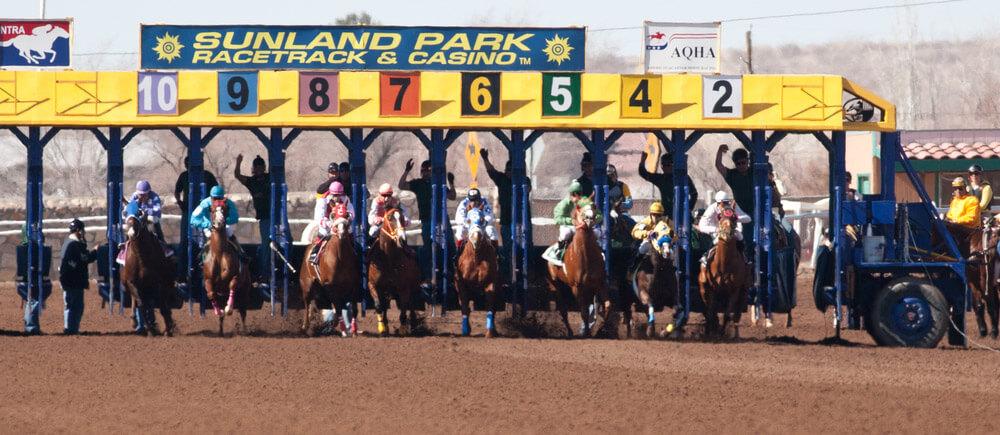 Quarter horses leave the starting gate