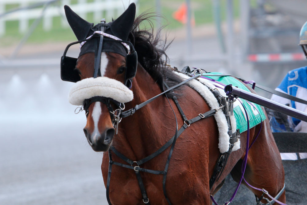 Standardbred Horse in driving