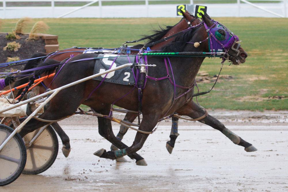 Standardbred Horses in harness racing