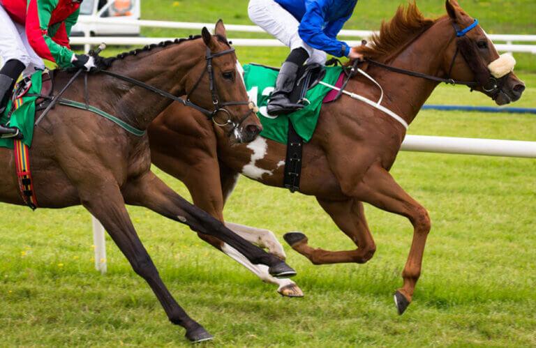 Thoroughbred horses racing