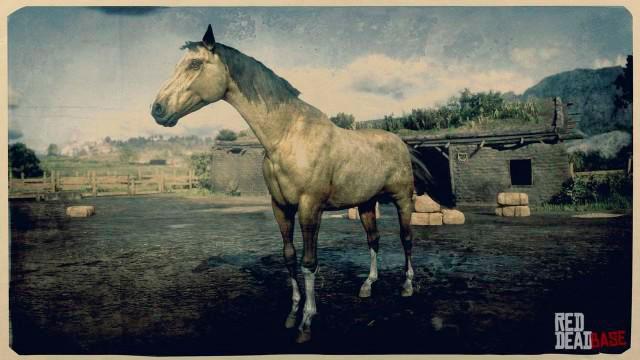 Turkoman Horse rdr2