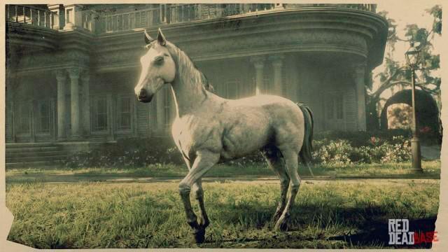 White Arabian Horse rdr2