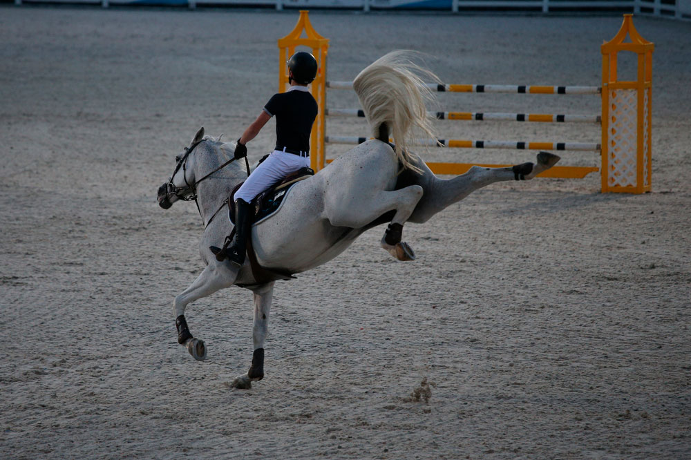 White sport horse kicking out in arena