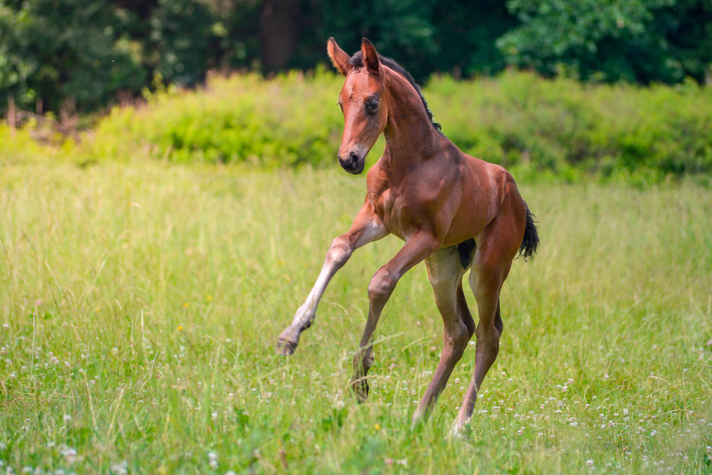 baby horse is playing around