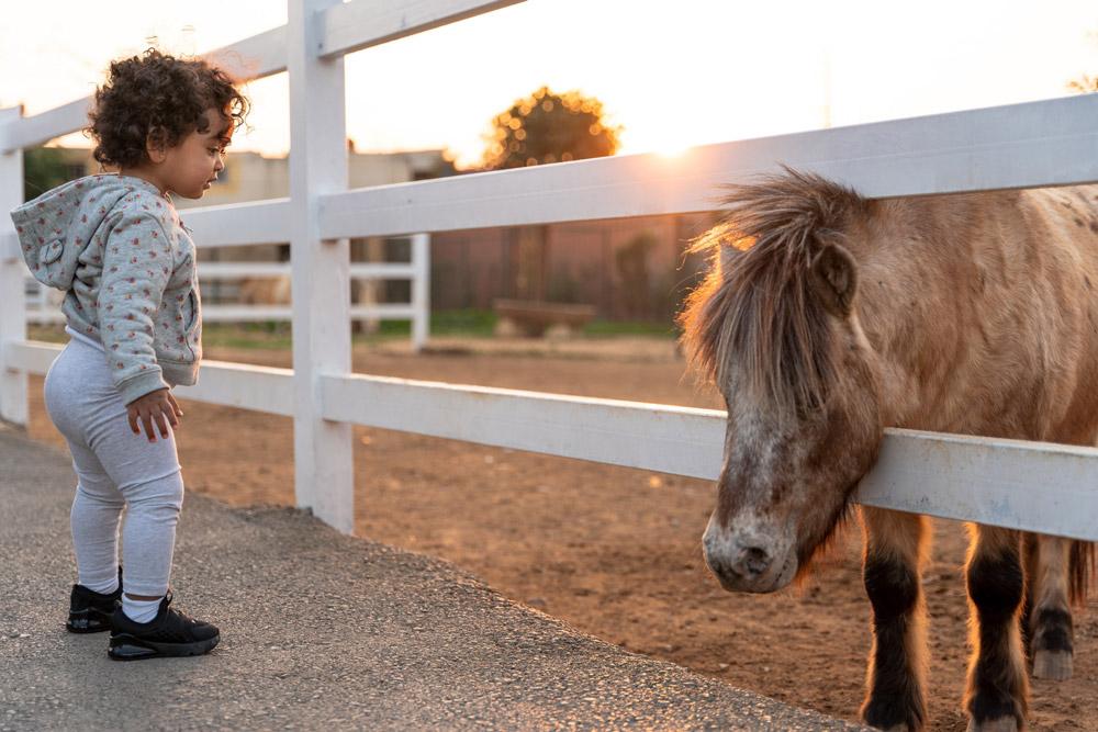 baby standing near pony