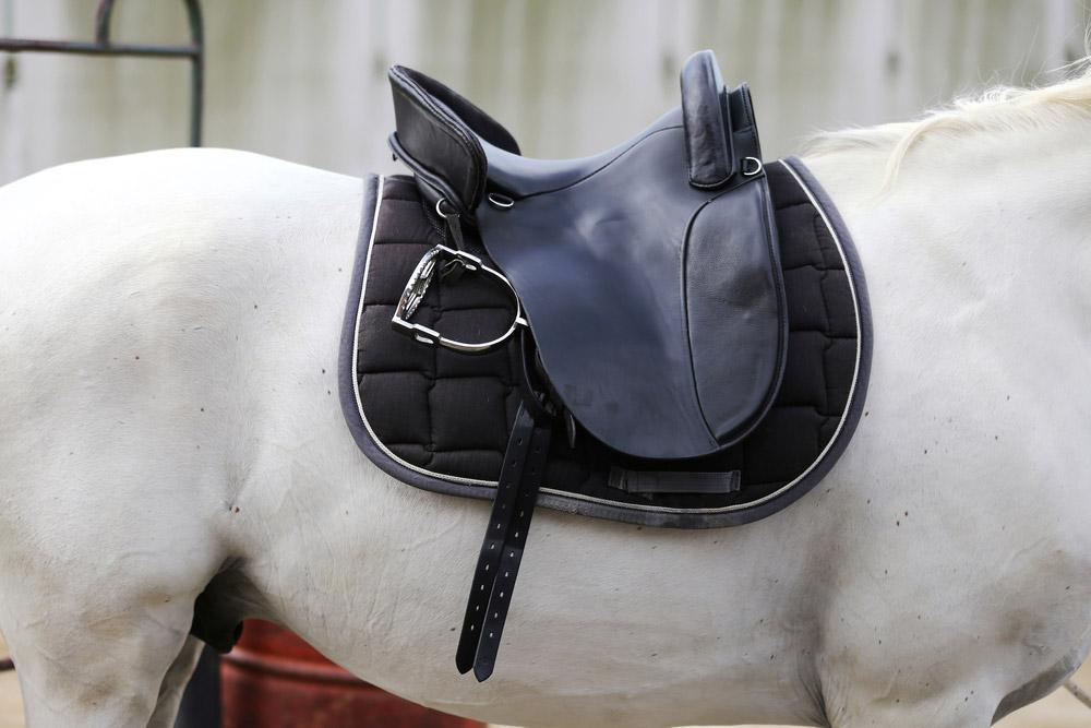 black english saddle on white horse