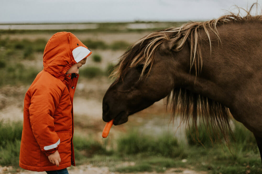 boy is feeding a horse with carrot