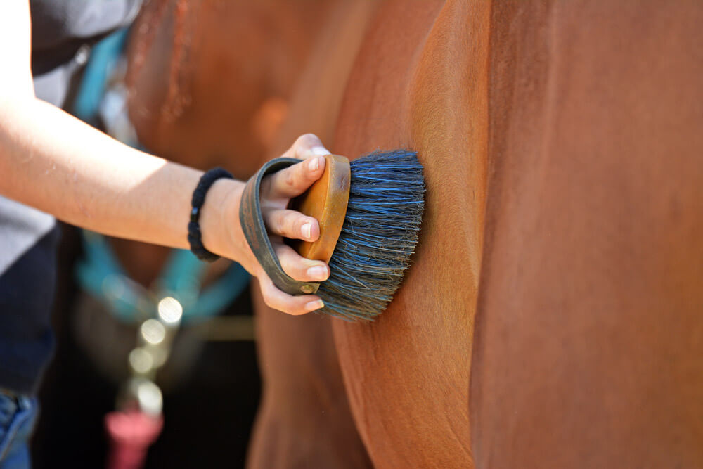 brushing a horse close up