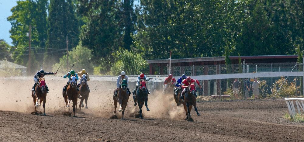 colorful quarter horse race