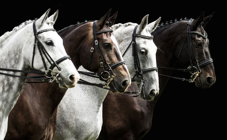 Common Horse Breeds