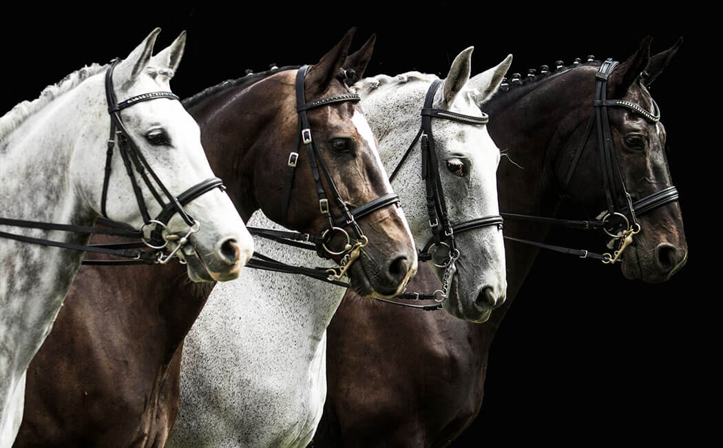 Common Horse Breeds