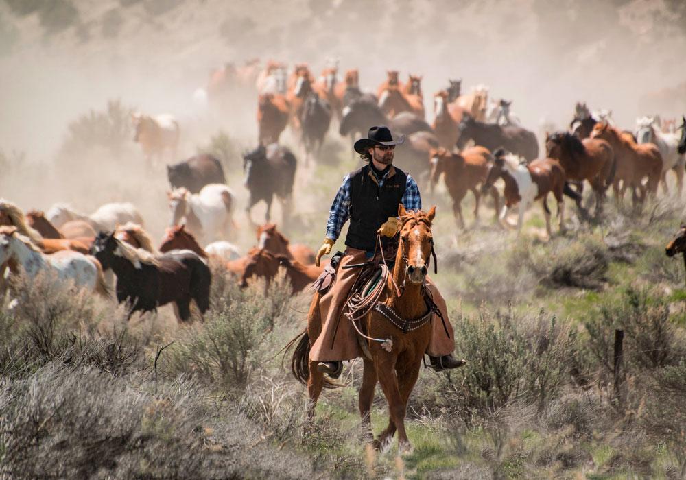 cowboy leading herd of horses