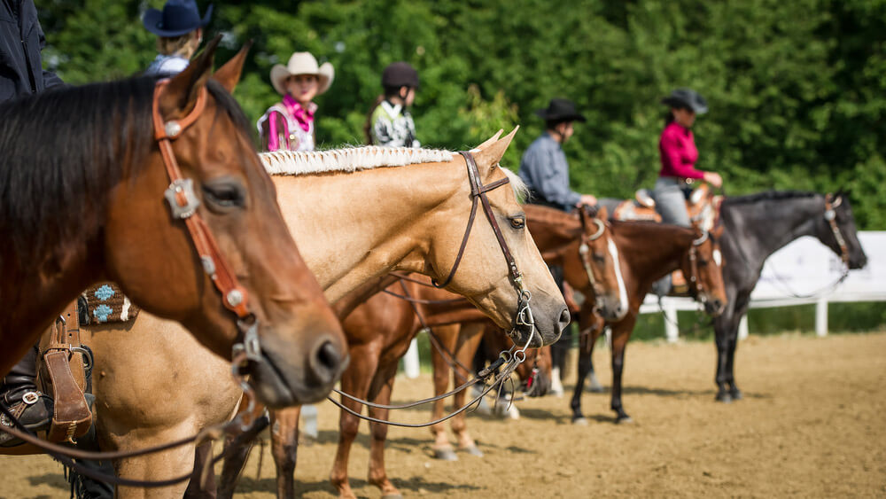 cowgirls are participating in a horse show