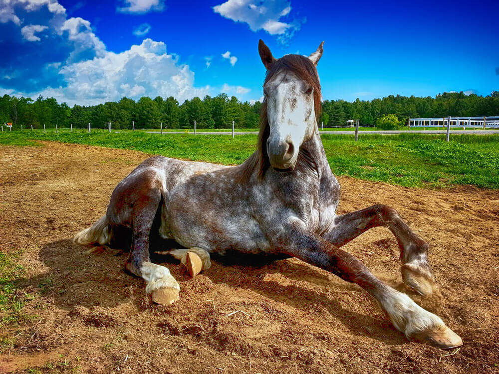 cute horse laying on ground