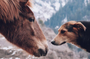 dog and horse staring at each other