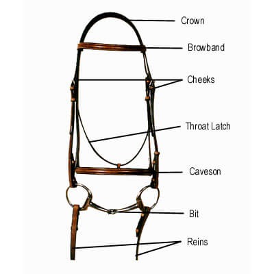 english bridle types