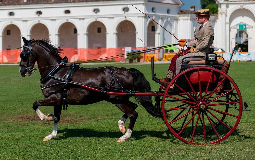 equestrian sport pleasure driving