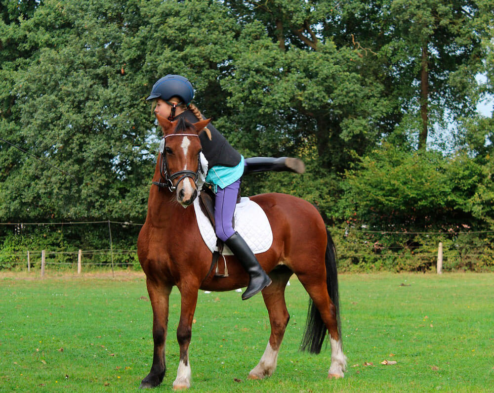 equestrian sport schooling