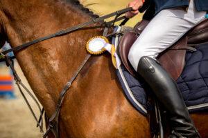 equestrian sports horseman