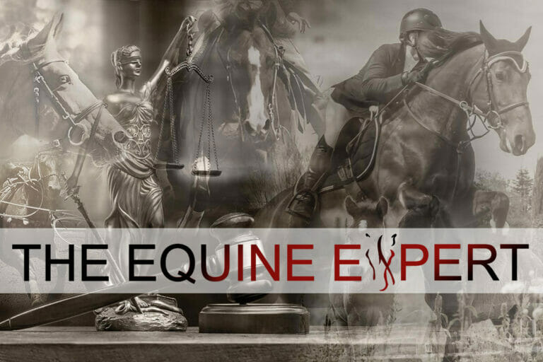 equine expert 768x512