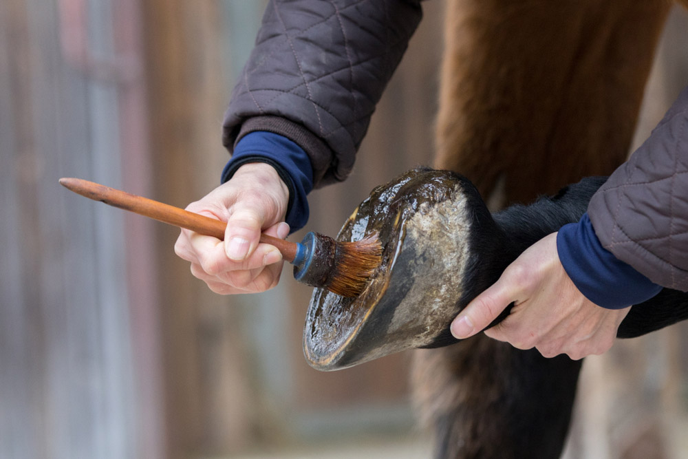 farrier is cleaning a horse hoof