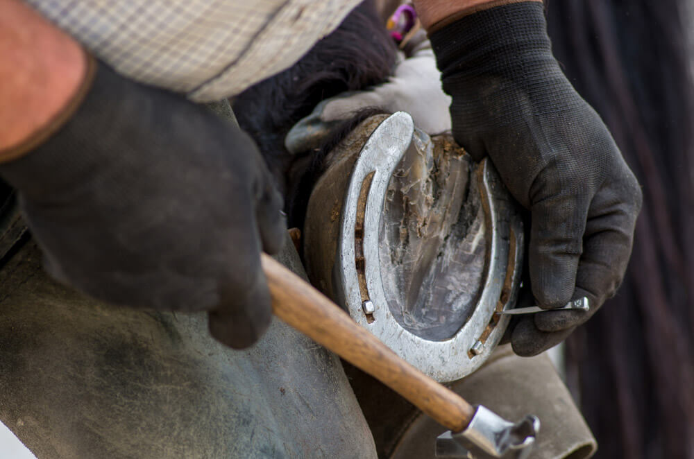 farrier is shoeing a horse