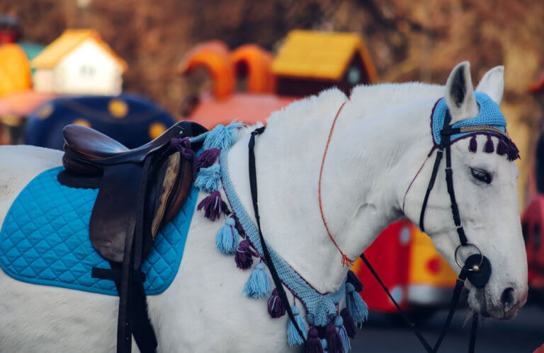 fully equipped equestrian horse