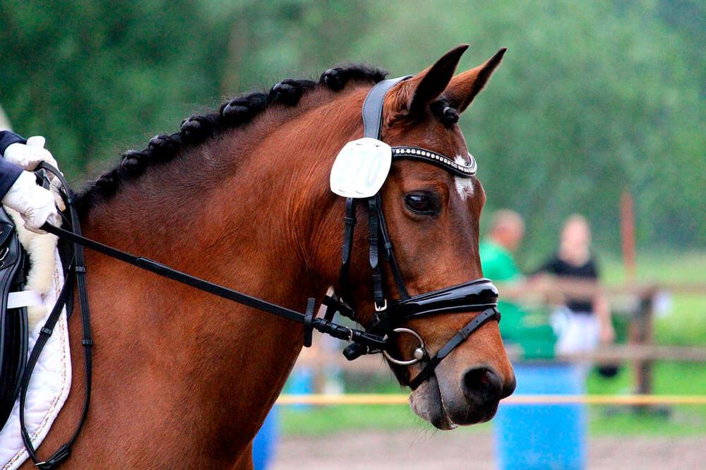 fully tack up horse