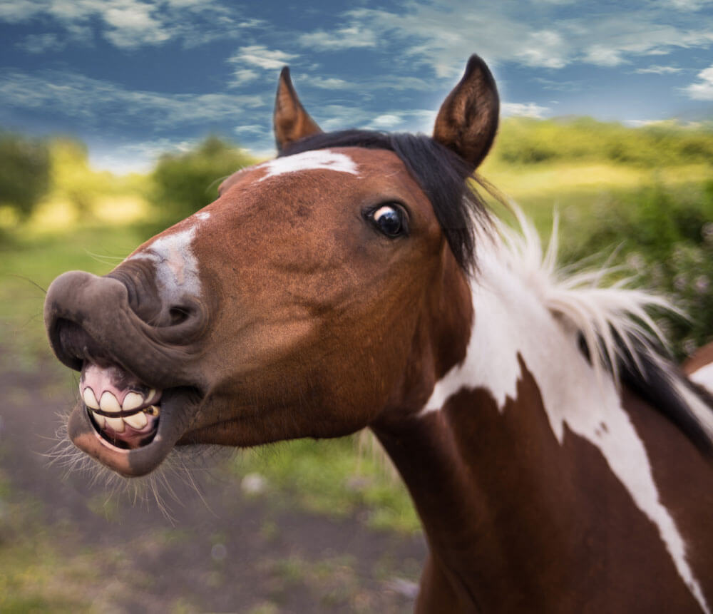 funny horse is smiling