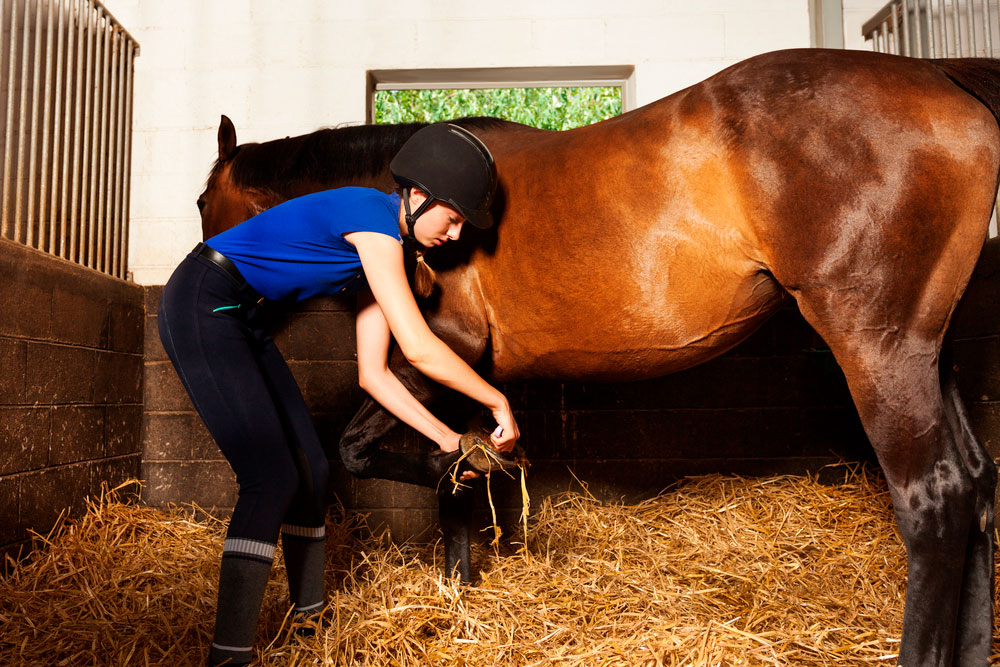 girl cleaning horse hooves