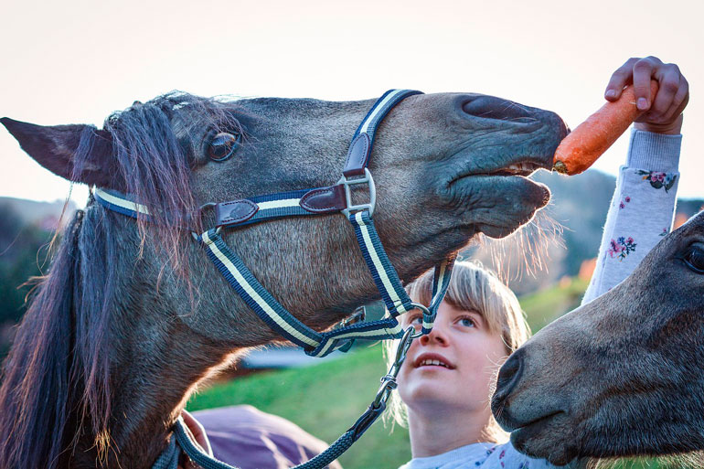 girl is feeding horses with carrot