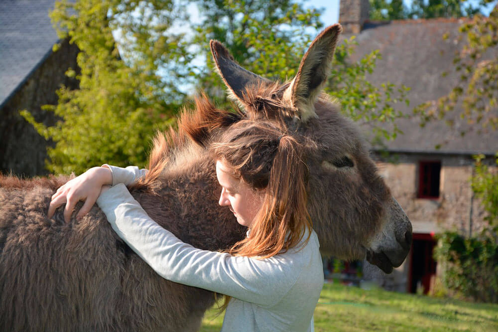 girl is hugging a donkey