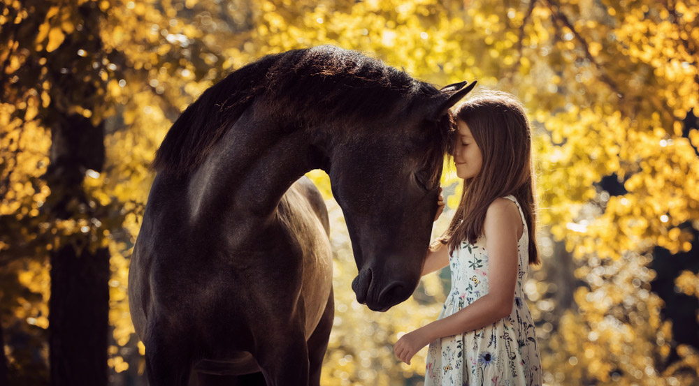girl is petting andalusian horse