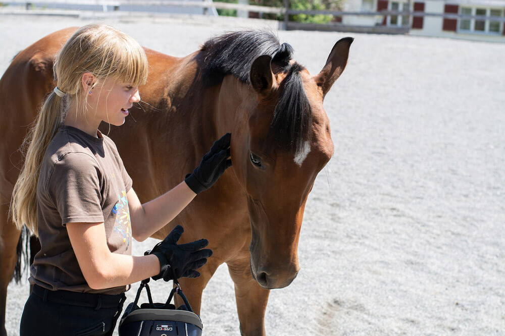 girl is petting horse