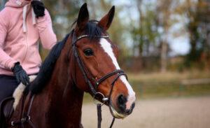 girl riding bay horse