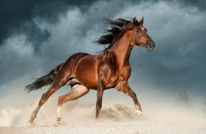 golden brown andalusian horse runs free
